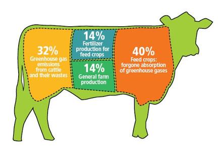 """Résultat de recherche d'images pour """"meat production environmental impact"""""""